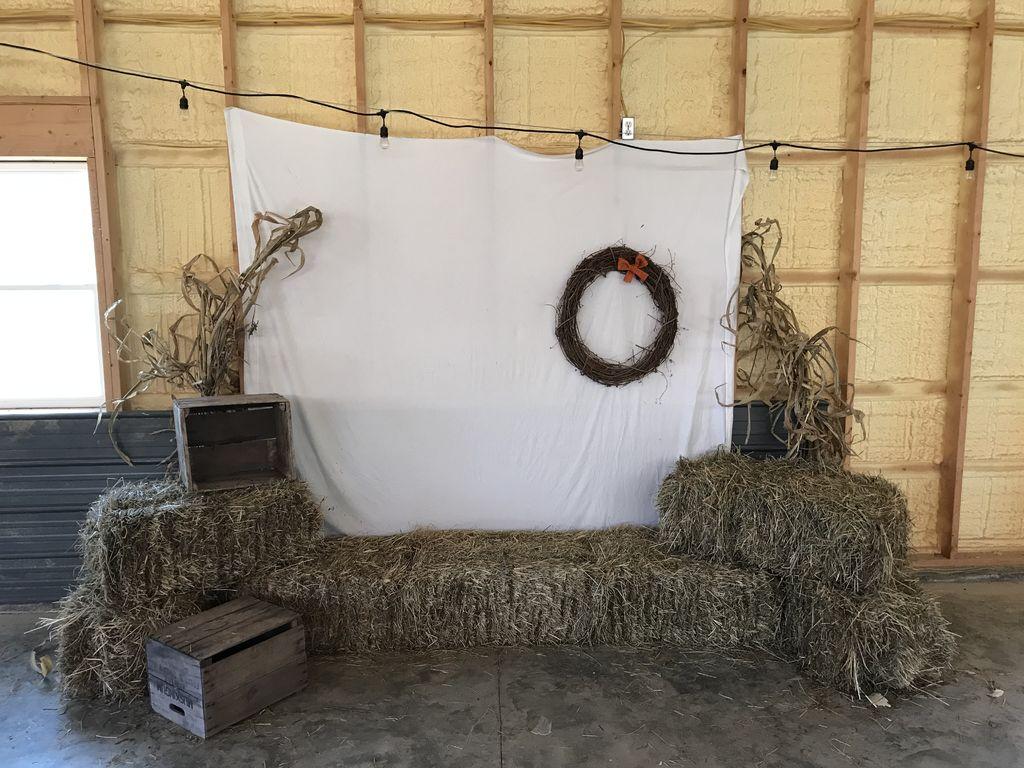 Picture of  Corn Stalks