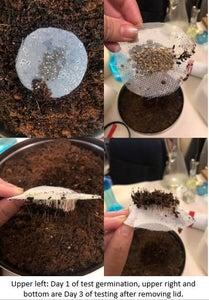 Plant Pillows