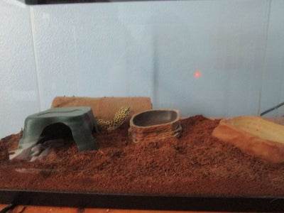 How to Change Reptile Bedding