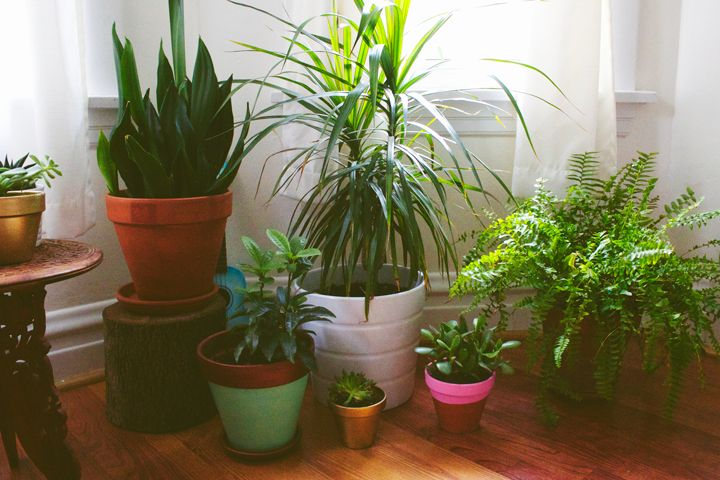 Picture of Bring Delicate Plants Inside