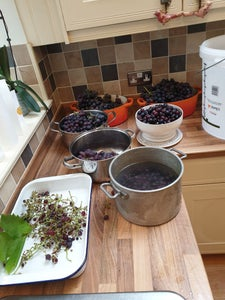 Processing the Grapes