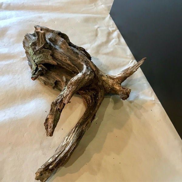 Picture of Choose the Wood for Your Driftwood Planter:
