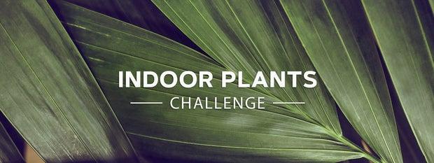 Indoor Plants Challenge