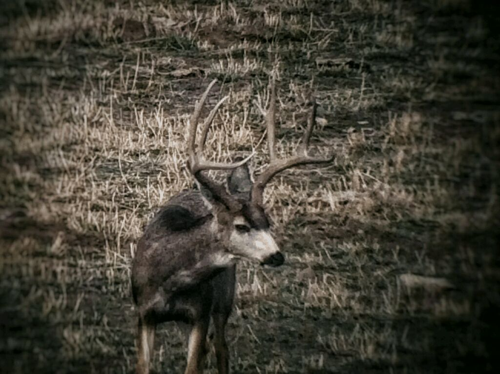 Picture of Trail Camera Tips