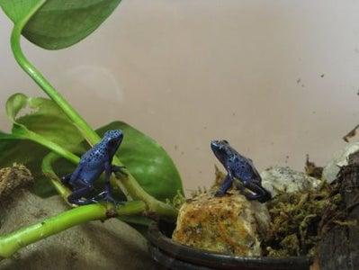 Quarantine Tank for Amphibians