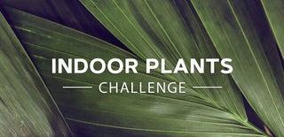 室内植物挑战