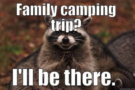 How to Keep Raccoons Away From Your Campsite