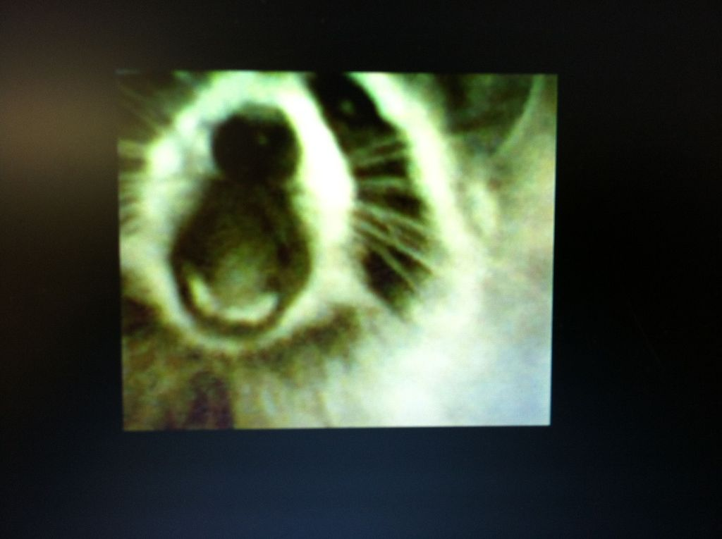 Picture of Motion Sensing Digital Camera & Alarm (a.k.a. the Critter Cam)