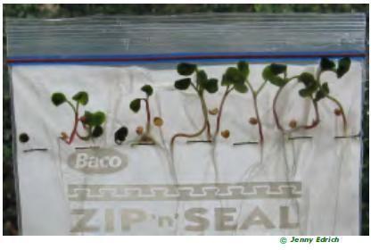 DIY Greenhouses for Kids