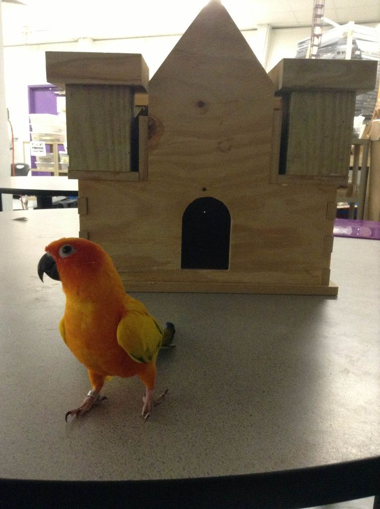 Picture of Ultimate Amazing Bird Castle of Awesomeness
