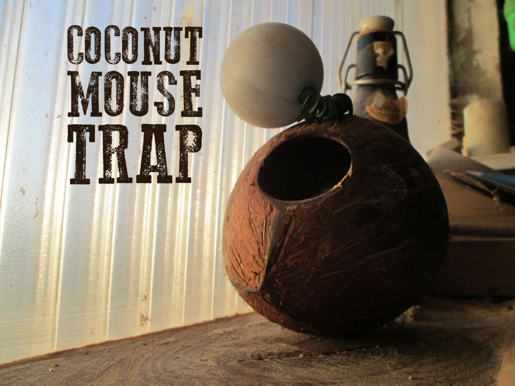 Coconut Mouse Trap: 4 Steps (with Pictures)