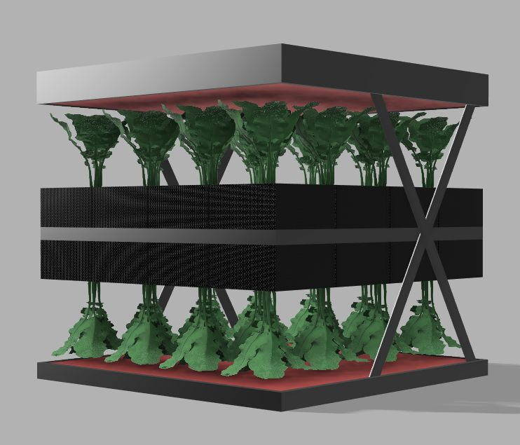 Picture of My Diary Growing Greens in Space!