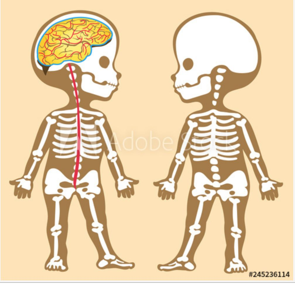 Picture of Piece Together Skeleton Using Adobe Stock