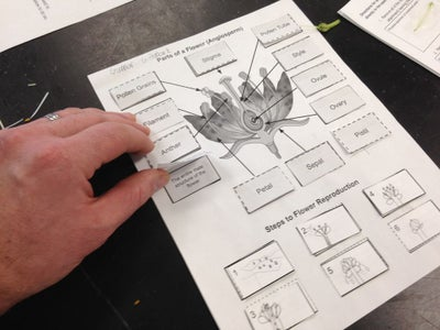 The Lesson - Pasting, Taping, and Adding the Steps of Flower Pollination