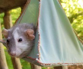 Hanging House for Little Critters