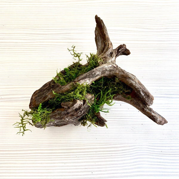 Picture of Adhere the Moss to the Driftwood: