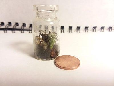 Tiny Cactus Terrarium!!!