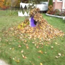 Leaf Monster With Tracking Eye