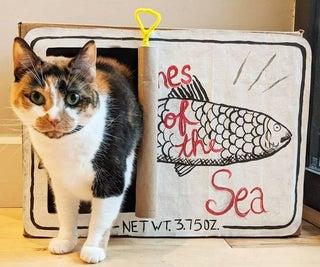 """纸板""""沙丁鱼罐头""""猫藏身处"""