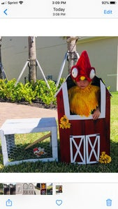 Hei Hei Rooster in a Hen House