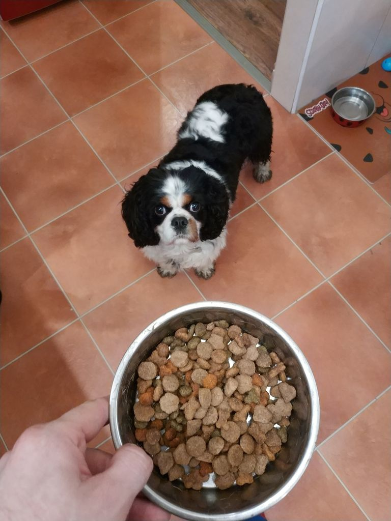 Picture of Doggo Meal Prep