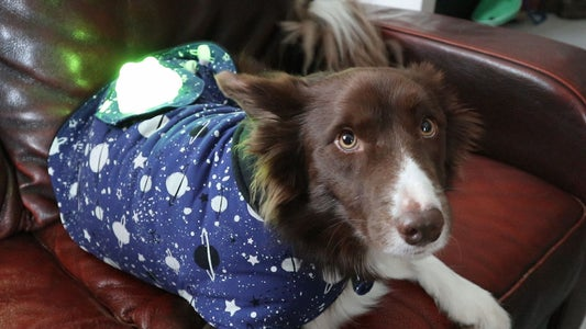 Galaxy Dog Jacket