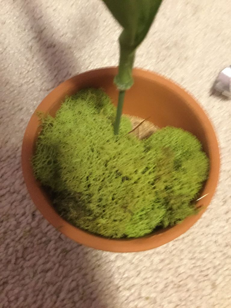 Picture of Add the Fake Grass/Moss