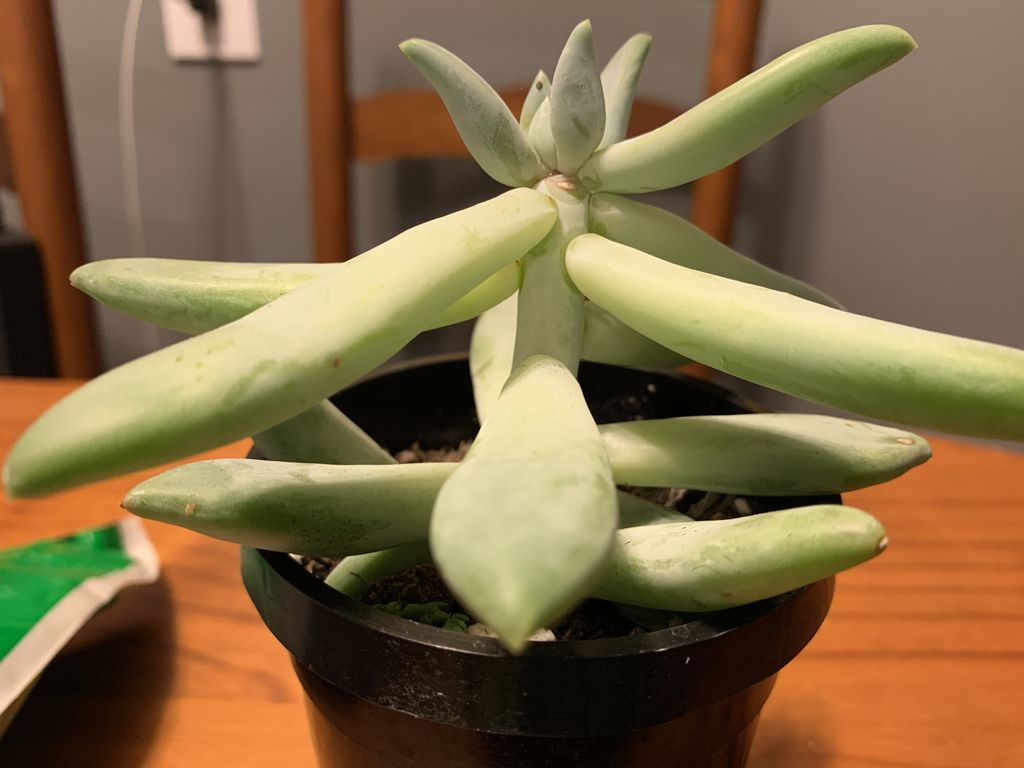 Picture of Plant Propagation - Succulents