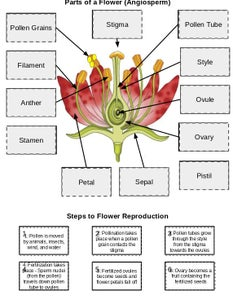 Flower Flip-Flap Activity