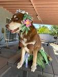 Hawaiian Hula Costume