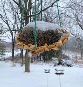 Sunflower Head Hanger