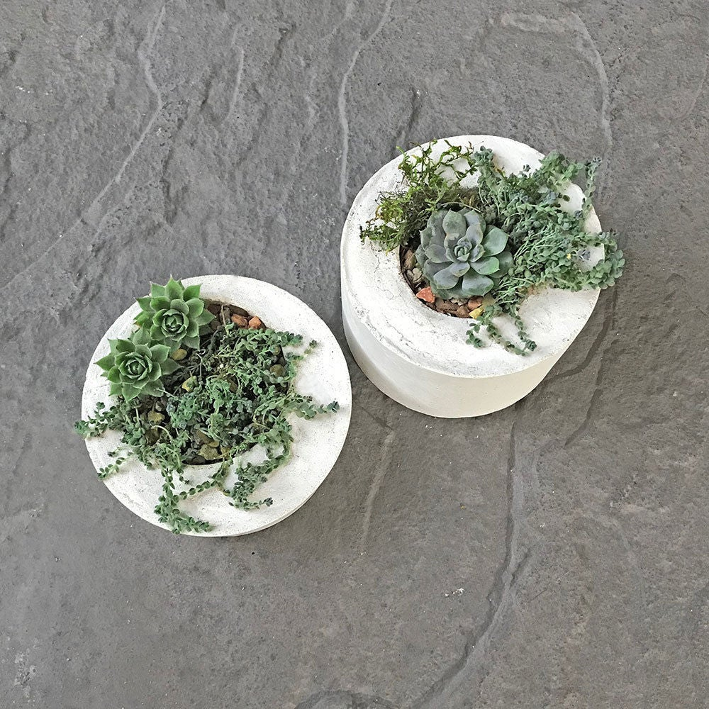 Picture of Plant Your Modern Concrete Planter