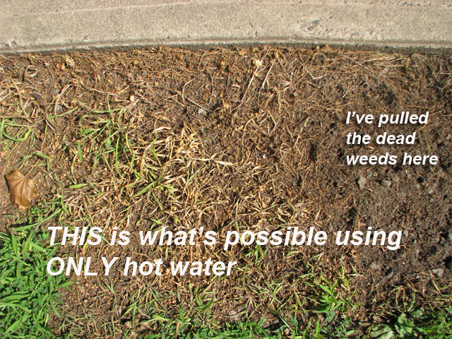Picture of FREE Herbicide!