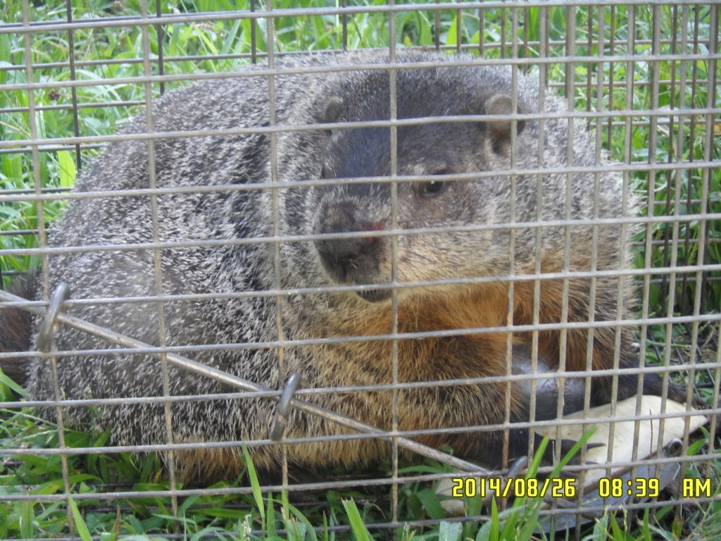 Picture of AD/HD... Its So Much Fun... and Look!! a GROUNDHOG!!!