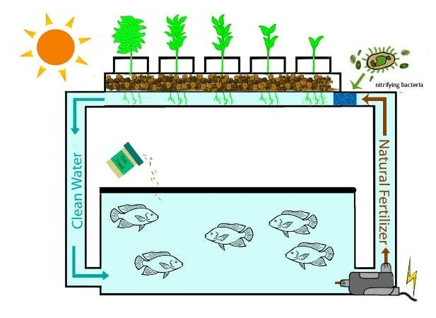 Picture of Automated Smart Aquaponics (With Cloud Based Dashboard)