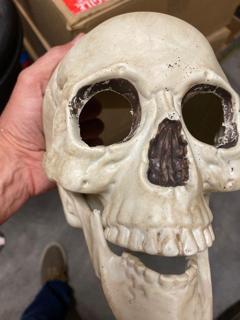 Picture of Cut Eye Sockets in Skull