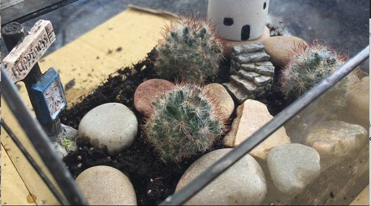 Planting and Decorating