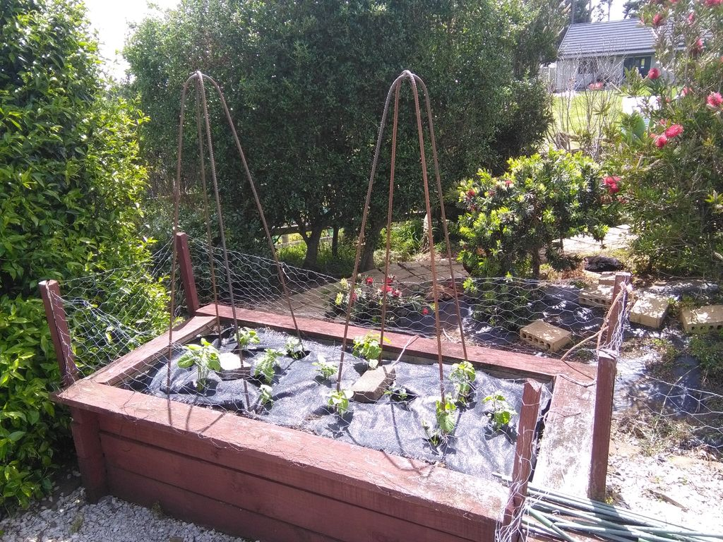 Picture of Vegetable Support or Trellis (or Obelisk!) What Would I Know!