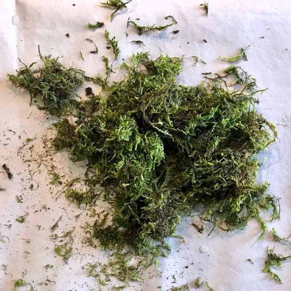 Picture of Prep the Moss: