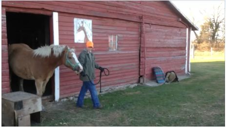 Tie Up the Horse