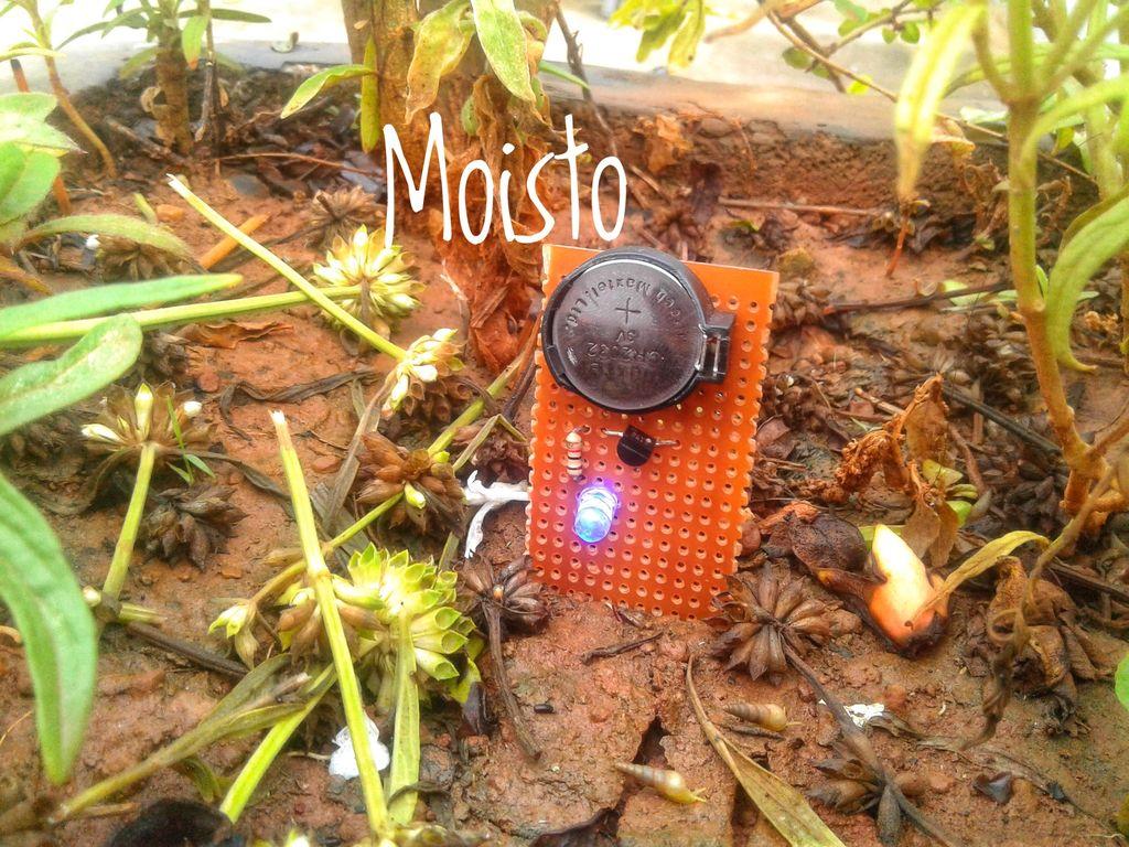 Picture of Moisto : Soil Moisture Sensor
