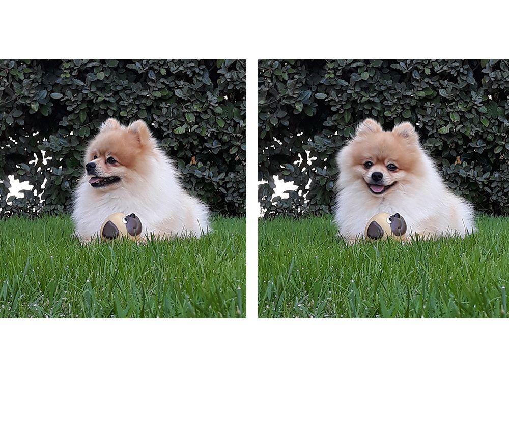 Dog ExtraSense