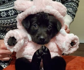 Fuzzy Hoodie for Puppy