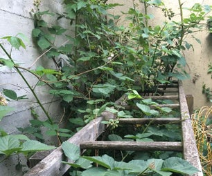 Plant Stand for Your Backyard With Wooden Ladders