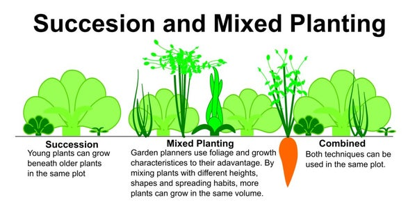 Plant and Root Shapes, Mix Them Up