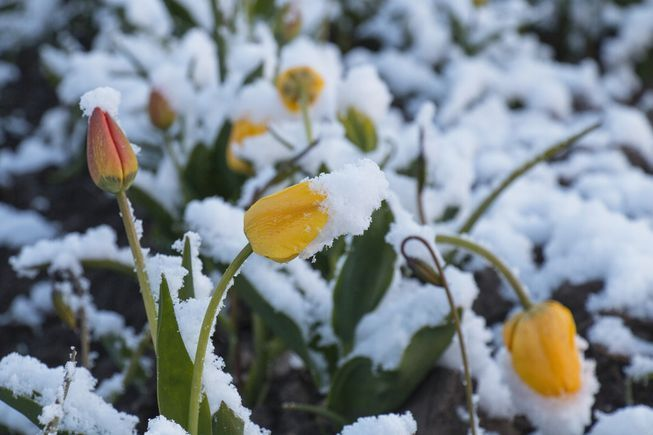 Picture of Winterizing Your Garden