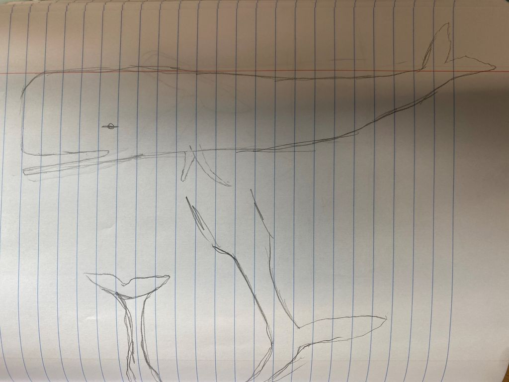 Picture of Sketch the Sperm Whale