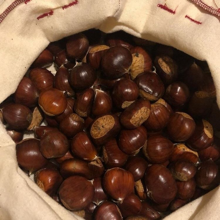 Picture of Chestnut Choice