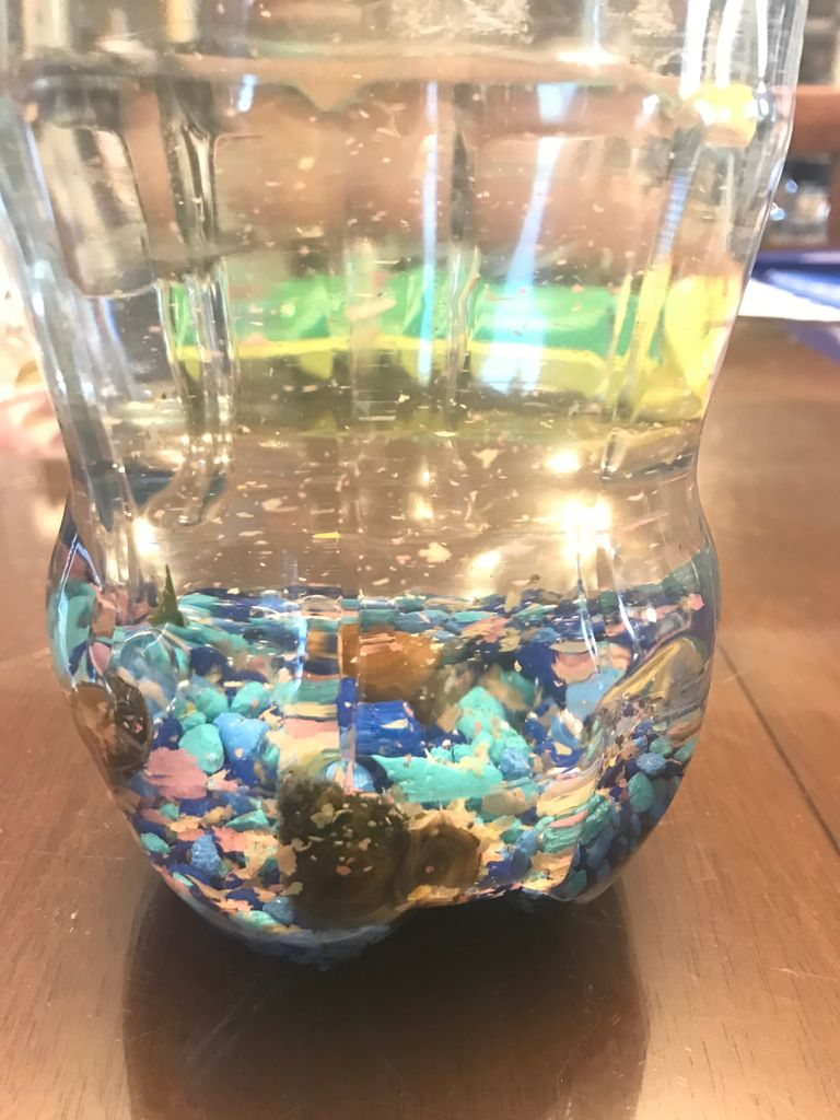 Picture of  Add Water, Fish, and Snails