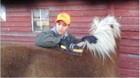 Groom the Horse